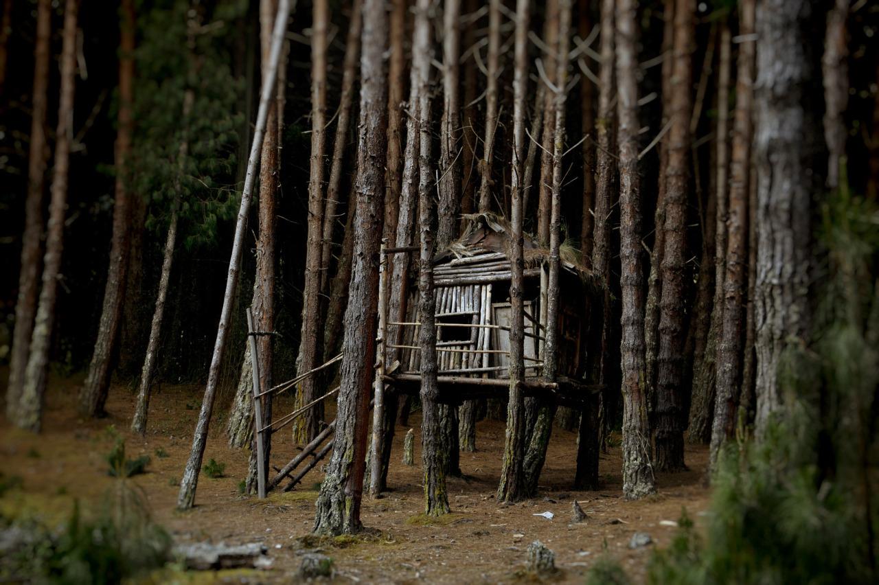 В лесу смешные картинки, малюсенькие